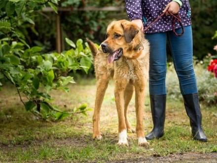 Młody Wektor, przepiękny, młody i spokojny pies do adopcji!