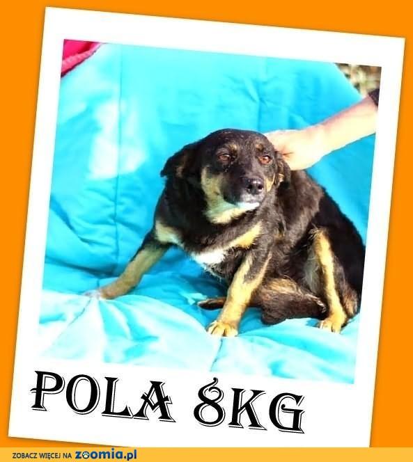 POLA-mała 8kg,przerażona schroniskiem,łagodna suczka.ADOPCJA