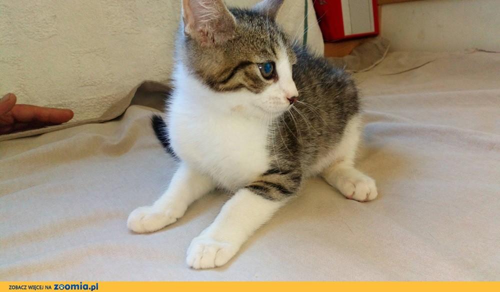 Mała kotka Elza szuka domu