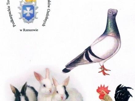 45 Jubileuszowa wystawa Dębica 2013- Króliki  Drób Gołębie rasowe !