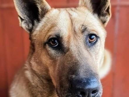 HERMES młody łagodny psiak szuka domku gdzie będzie członkiem rodziny