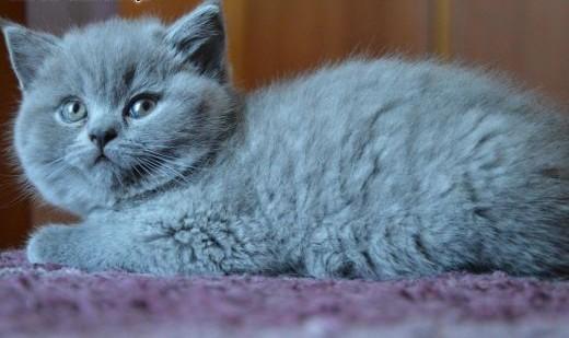Bursztynooka koteczka   mazowieckie Płock