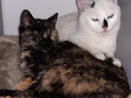 Kot i kotka szukają domów