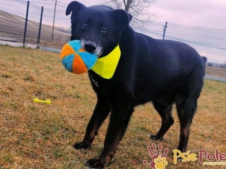 TYTANEK-superaśny psi przyjaciel prosi o dobry dom  adopcja