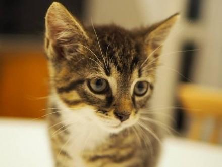Szukamy domu dla ślicznych i przyjacielskich kociaków