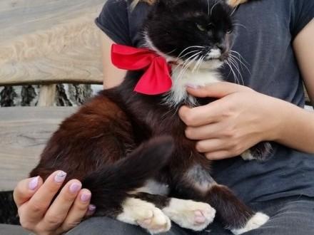 Kicia  starsza  rezolutna niezwykle pozytywna koteczka!