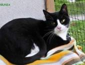 Śliczna, roczna wyjątkowa kotka Rabcia szuka domu