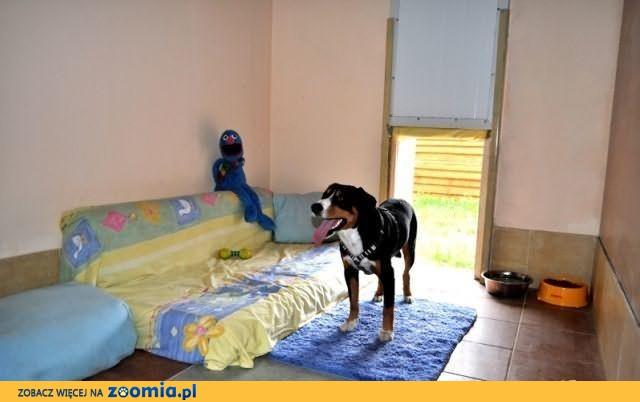 HOTEL dla PSA KOTA Gryzonia PSAnatorium i.. wolny czas dla właścicieli