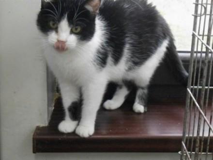 Ciekawska kotka Pazurka czeka aby Cię poznać   warmińsko-mazurskie Olsztyn