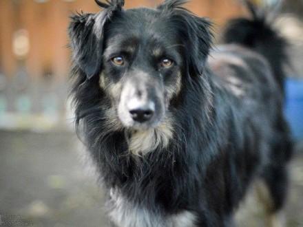 Zygi, pies z najpiękniejszym spojrzeniem świata, uległy, wspaniały