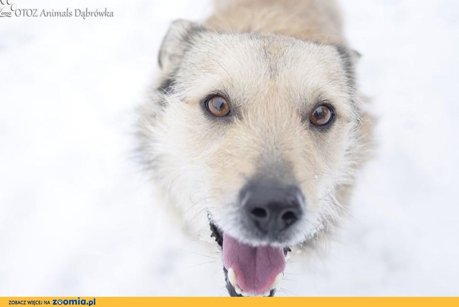 OTOZ Animals Dąbrówka - Brutusik szuka miłości
