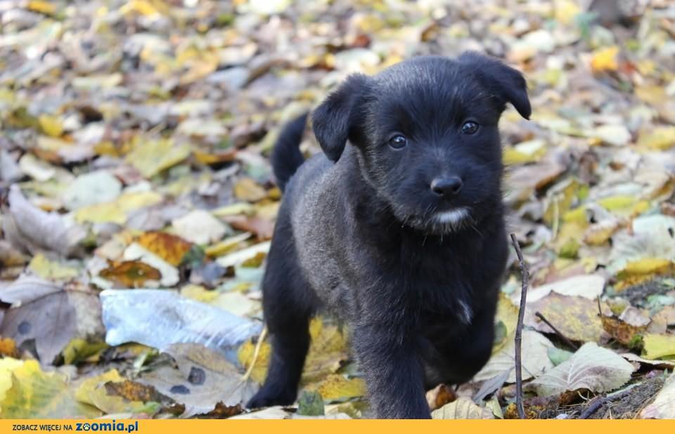Molly - szczenię do adopcji :) Szuka dobrego domku :)