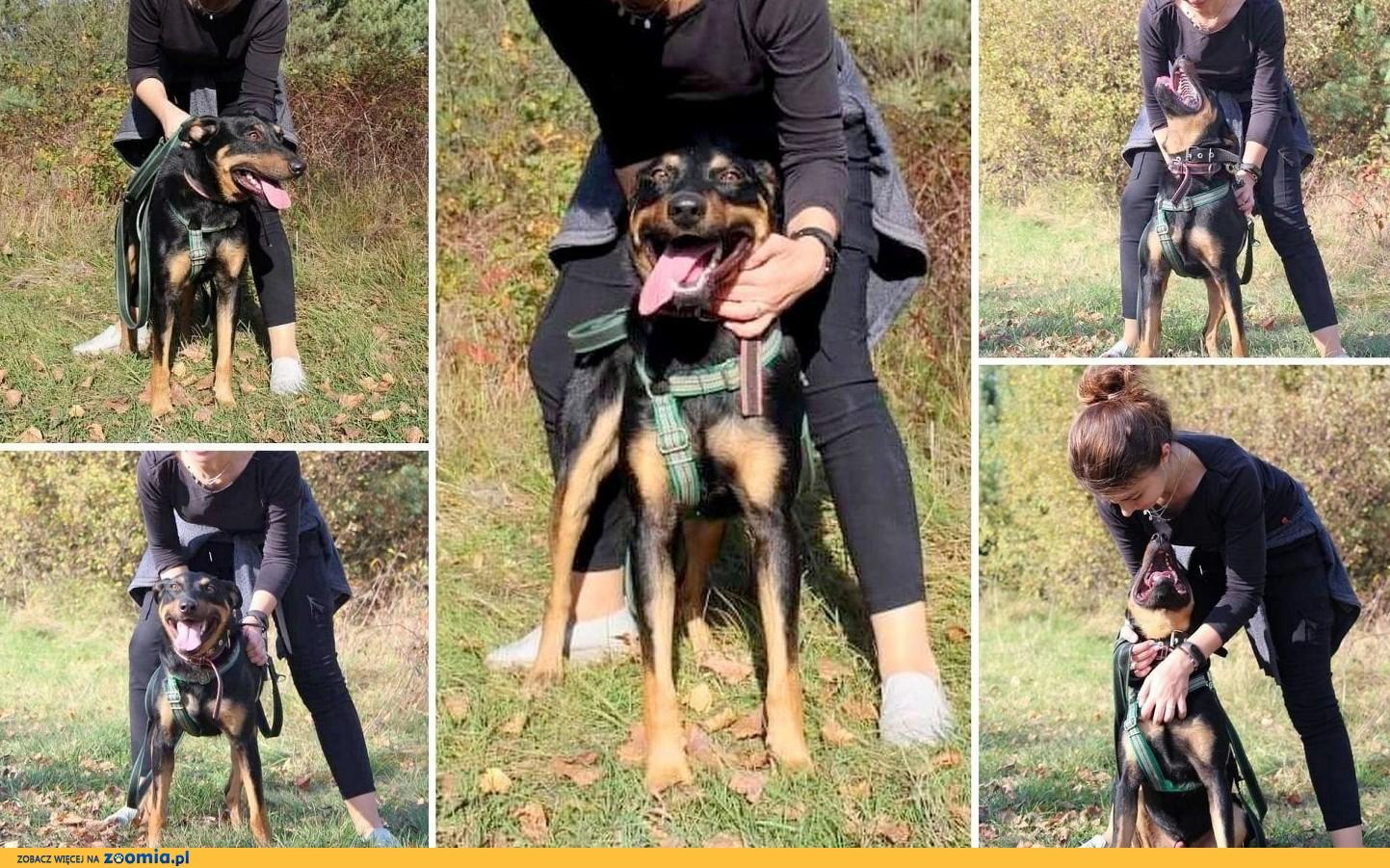 Cześć. Jestem WALDEK, mega fajny, radosny, młodziutki, energiczny pies.