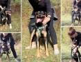 'Cześć. Jestem WALDEK, mega fajny, radosny, młodziutki, energiczny pies.