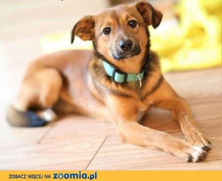 ROMEK - 7 miesięczny, uroczy szczeniak do adopcji,  wielkopolskie Poznań