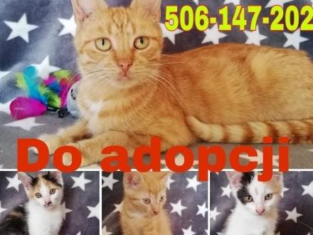 PILNE!  Kociaki szukają domu! ZASZCZEPIONE I ODROBACZONE Ełk i okolice! Możliwy dowóz!