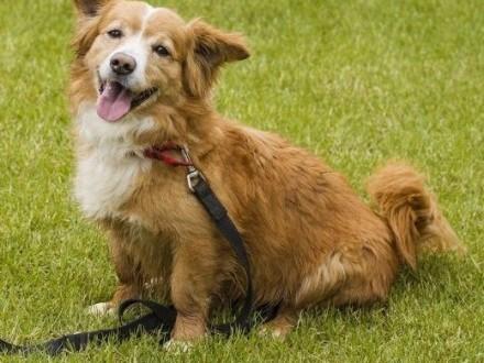 4-letni JOGI cudowny pies czeka na troskliwych opiekunów   łódzkie Łódź