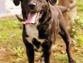 'Wspaniały Leo w typie labradora :),  warmińsko-mazurskie Olsztyn
