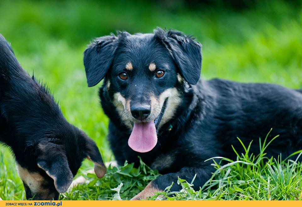 Big Dog Rescue Ma