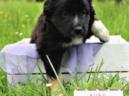 Buba i Piper - dwie psie siostry szukają domu   mazowieckie Warszawa
