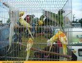Ptaki egzotyczne , drób , gołebie
