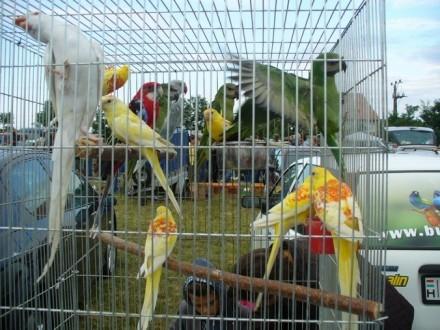 Ptaki egzotyczne   drób   gołebie