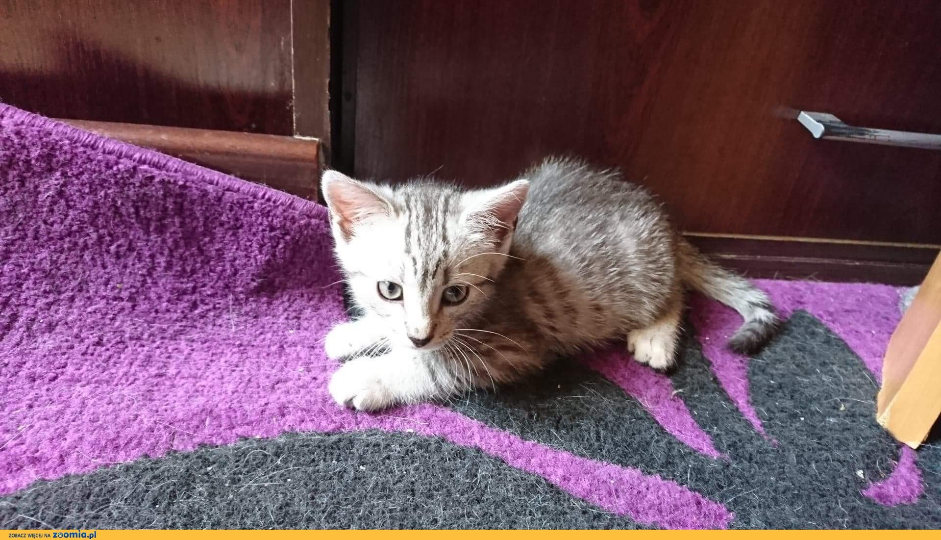 Mała kotka Stokrotka szuka domu