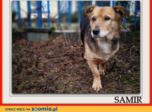 4 lata,średni 13 kg,łagodny,przyjacielski,szczepiony piesek SAMIR.Adopcja.,  łódzkie Łódź