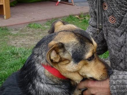 Arni młodziutki  nieduży miły psiak PILNIE szuka domu!