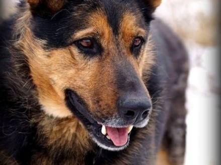 Fred - Cudny psiak czeka na kochający dom   mazowieckie Warszawa