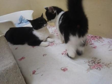 12 miesięczna Mela  cudna koteczka do adopcji