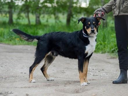 Roki - młody  spokojny i zrównoważony psiak szuka kochającego domu!