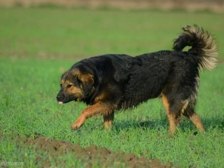 Matylda, delikatna, przyjazna kudłata sunia szuka kochającego domu!