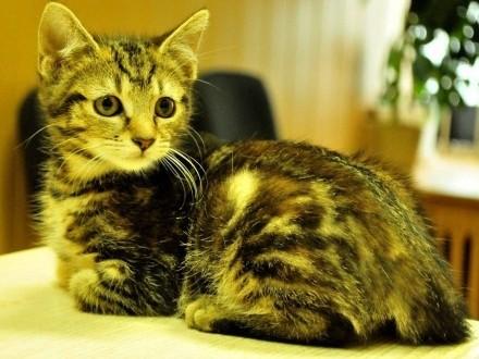 Koteczki: Pinezka i Śruba szukają domów