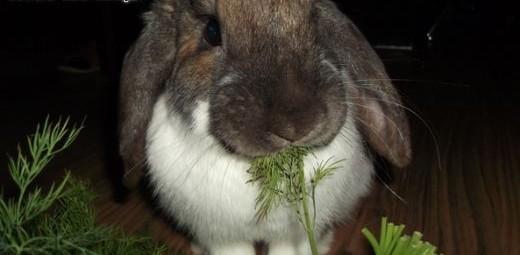 Sympatyczne króliki szukają domu   mazowieckie Warszawa