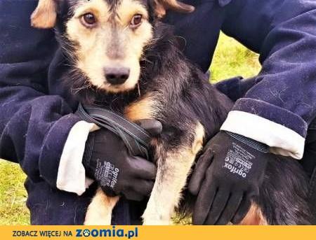 LUKI - nieśmiały, spragniony miłości psiak szuka domu!,  mazowieckie Warszawa