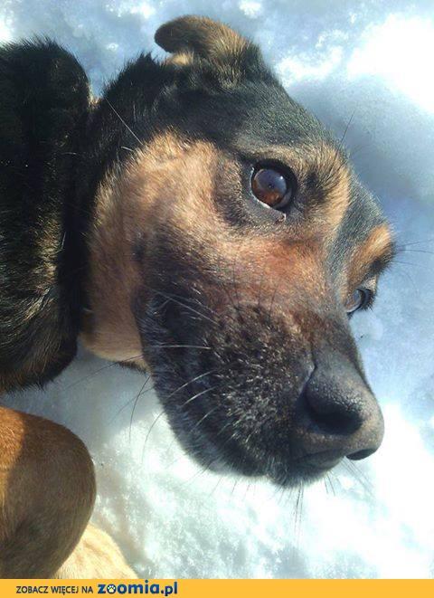 Manuel, przyjazny, młody psiak szuka domu!