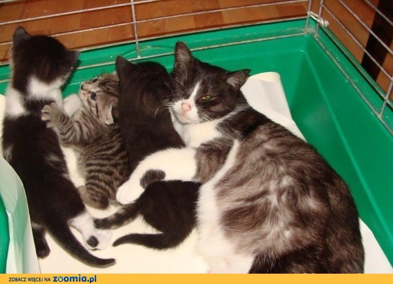 kocia adopcja