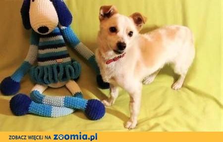 RAMBO - wrażliwy, malutki, 6 kg psiak; szuka domu,  małopolskie Kraków