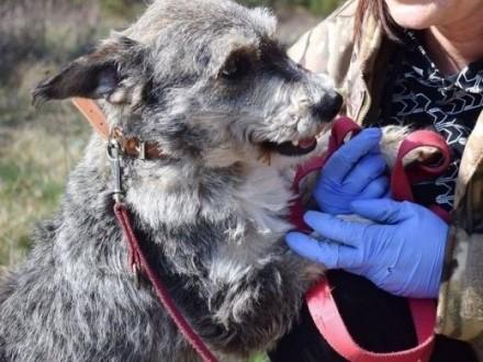 Poznaj DOLARA - przyjacielskiego  niedużego psiak   lubelskie Lublin