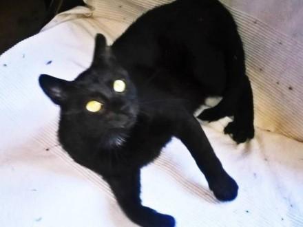 Czarny kocur Czarli szuka domu