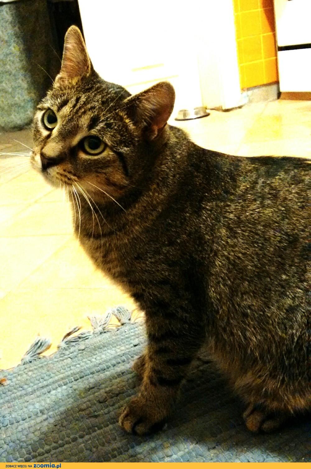 Zaginął kot o imieniu  GUCIO_