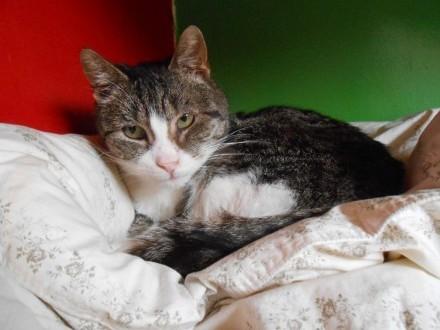 Kot marzyciel - dla kochających spokój