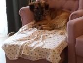 Benio, młodziutki i grzeczny psiak szuka domu!