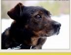 BORO,15kg,łagodny,wesoły,towarzyski pies średni.ADOPCJA,  dolnośląskie Wrocław