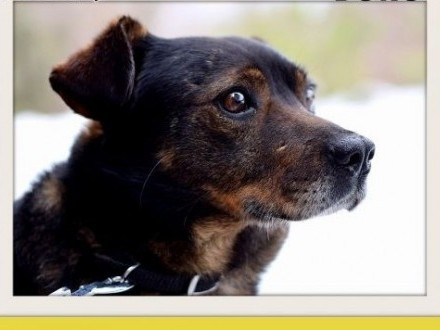 BORO 15kg łagodny wesoły towarzyski pies średniADOPCJA   dolnośląskie Wrocław