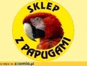 Największy wybór papug