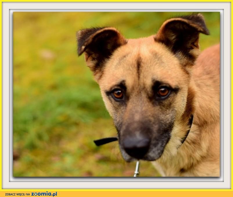 1,5 roczny, duży 20 kg pies,bardzo przyjazny,łagodny AWATAR_Adopcja