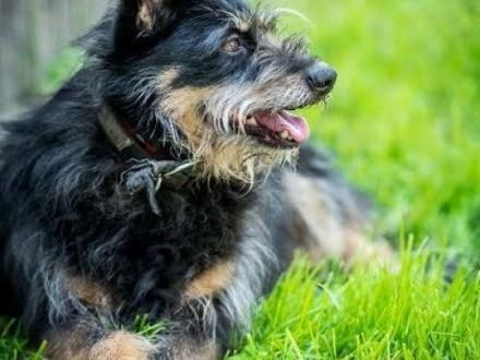 Krecia-urocza sunia w typie terriera Nie pozwól jej dłużej czekać na dom!   mazowieckie Radom