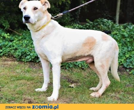 MUNDI - kochany, spokojny psiak szuka domu,  mazowieckie Warszawa